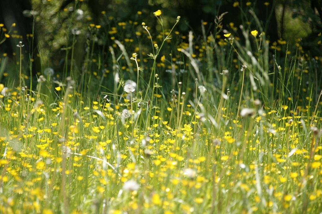 Alergia y primavera
